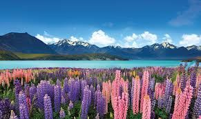 New Zealand Rail and Cruise Tour Tours and couples holiday experience