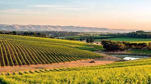 Savour South Australia Tours and short breaks holiday experience